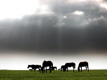 A flock of horse - Free Stock Photo