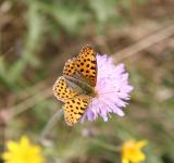Free Photo - Spotted butterfly