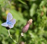 Free Photo - Soft blue butterfly