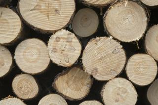 Download Pile of wood poles Free Photo