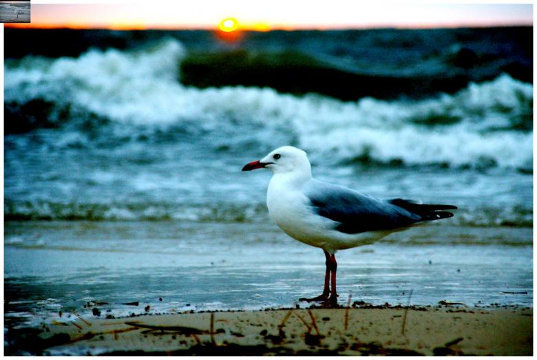 Free Stock Photo of Seagull Created by karl
