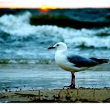 Free Photo - Seagull