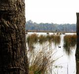 Free Photo - Reedy swamp