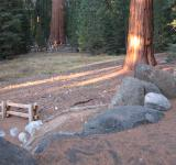 Free Photo - Redwood Meadow