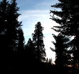 Free Photo - Sundown Forest
