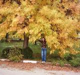 Free Photo - Betty under the golden tree