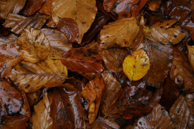 Free Stock Photo of Wet leafs Created by christian taylor hauschild