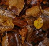 Free Photo - Wet leafs