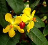 Free Photo - Wild yellow flowers