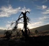 Free Photo - Desert tree