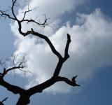Free Photo - Crazy Tree