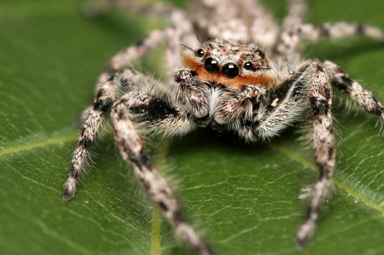Free Stock Photo of Arachnid Created by trevor henry