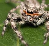 Free Photo - Arachnid
