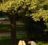 Free Photo - Under the tree
