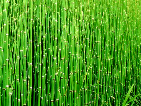Bamboo - Free Stock Photo
