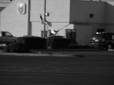 Flying Across the Parking Lot - Free Stock Photo