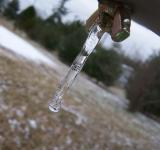 Free Photo - Little icicle
