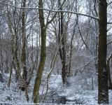 Free Photo - Snow in the trees