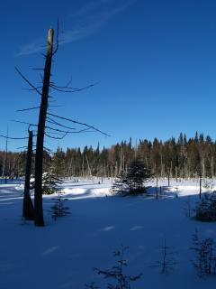 The beaver pond Free Photo