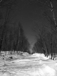 Download Winter Night Free Photo