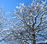 Free Photo - Snow covered branches
