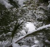 Free Photo - Winter Wonderland