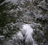 Free Photo - Winter wonderland 2