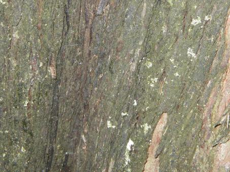 Tree bark texture - Free Stock Photo