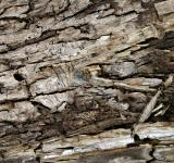 Free Photo - Cracked bark