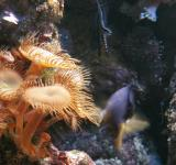 Free Photo - Aquarium