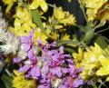 Free Photo - Purple and yellow flowers