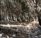 Free Photo - Rocky forest ground