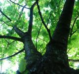 Free Photo - Tall tree