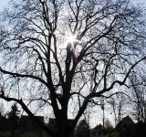 Free Photo - Bare tree