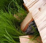 Free Photo - Wood in grass