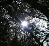 Free Photo - Tree branches in the sun