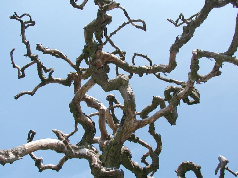 Free Stock Photo of Abstract tree branches Created by Bjorgvin