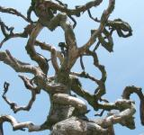 Free Photo - Abstract tree branches