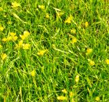 Free Photo - Yellow flowers in grass