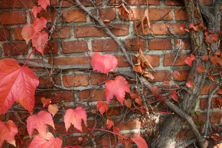 Free Stock Photo of Plant on a brick wall Created by Bjorgvin