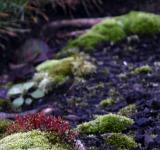Free Photo - Green moss and red flowers