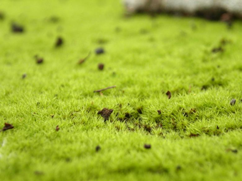 Free Stock Photo of Green grass Created by collin votrobeck