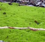 Free Photo - Green grass