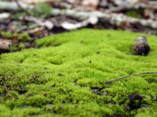 Download Green grass Free Photo