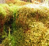 Free Photo - Green and yellow moss