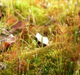 Free Photo - Grass and moss