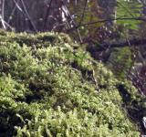 Free Photo - Moss and trees