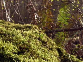 Moss and trees Free Photo