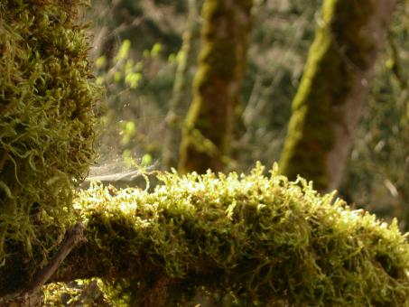Moss and trees - Free Stock Photo