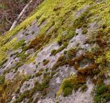Free Photo - Moss on rocks